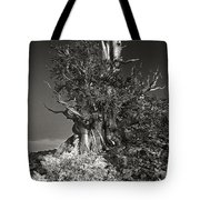 Bristlecone And Wildflowers In Black And White Tote Bag