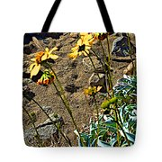 Brittlebush On Borrego Palm Canyon Trail In Anza-borrego Desert Sp-ca Tote Bag