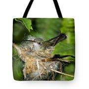 Broad-billed Hummingbird In Nest Tote Bag