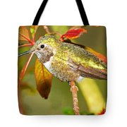 Broad Tailed Hummingbird Tote Bag
