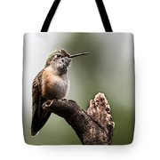 Broad-tailed Hummingbird Sit  Tote Bag