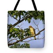 Broad Winged Hawk Tote Bag