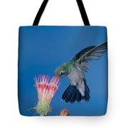 Broadbill Hummingbird Feeding At Flower Tote Bag