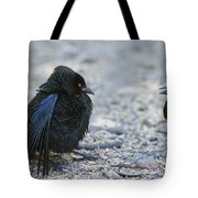 Bronzed Cowbird Display Tote Bag