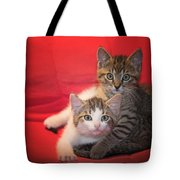 Brothers Kittens Tote Bag