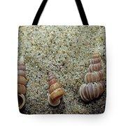 Brown-banded Wentletrap Tote Bag