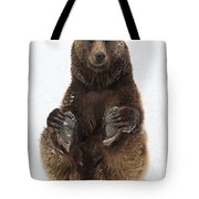 Brown Bear Holding Its Paws Germany Tote Bag