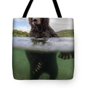 Brown Bear In River Kamchatka Russia Tote Bag