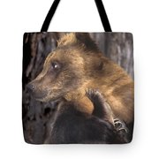 Brown Bear Tackles An Itchy Foot Endangered Species Wildlife Rescue Tote Bag