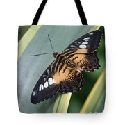 Brown Clipper Butterfly #4 Tote Bag
