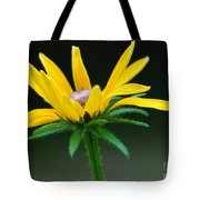 Brown-eyed Susan Tote Bag