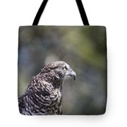 Brown Goshawk V2 Tote Bag