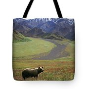 Brown Grizzly Bear In Denali National Tote Bag