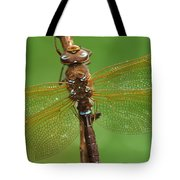 Brown Hawker Dragonfly Switzerland Tote Bag