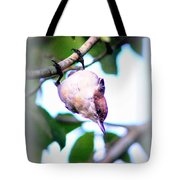 Brown-headed Nuthatch 9173-006 Tote Bag