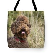 Brown Labradoodle In Field Tote Bag