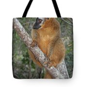 brown Maki Madagascar 1 Tote Bag