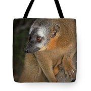 brown Maki Madagascar 2 Tote Bag