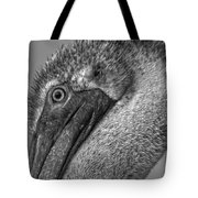 Brown Pelican In Black And White Tote Bag