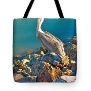 Brown Pelican In San Carlos-sonora Tote Bag