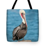 Brown Pelican Pelecanus Occidentalis Tote Bag