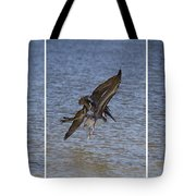 Brown Pelican - Triptych Tote Bag