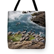 Brown Pelicans And Gulls On The Reef Tote Bag
