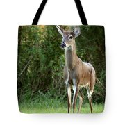 Buck In The Meadow Tote Bag