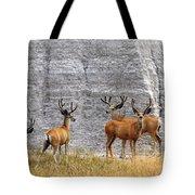 Bucks Abound Tote Bag