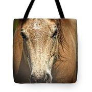 Buckskin Stallion Tote Bag