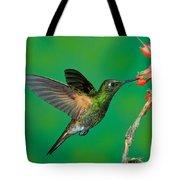 Buff-tailed Coronet Tote Bag