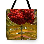 Buffalo Berries Tote Bag