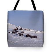 Buffalo Herd In Snow   #6075 Tote Bag