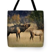 Bugling Elk With Calf Tote Bag