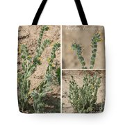 Bugloss Fiddleneck Collage Tote Bag