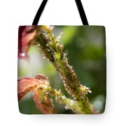 Bugs Are Hungry Tote Bag