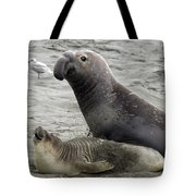 Bull Approaches Cow Seal Tote Bag by Mark Newman