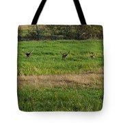 Bull Elk At Dean Creek Tote Bag