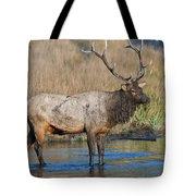Bull Elk Crossing River Tote Bag