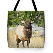 Bull Elk IIII Tote Bag