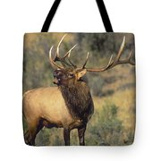 Bull Elk In Rut Bugling Yellowstone Wyoming Wildlife Tote Bag