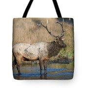 Bull Elk On The Madison River Tote Bag