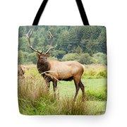 Bull Elk On Watch Tote Bag