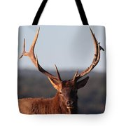 Bull Elk Portrait Tote Bag