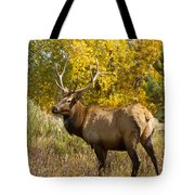Bull Elk With Autumn Colors Tote Bag