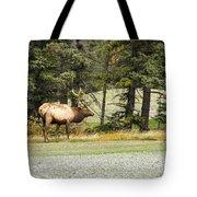 Bull In Waiting Tote Bag