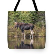 Bull Moose 3 Tote Bag