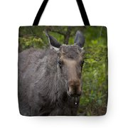 Bull Moose   #5712 Tote Bag