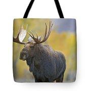 Bull Moose In Autumn Tote Bag