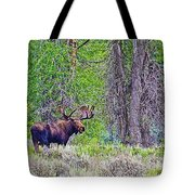 Bull Moose In Gros Ventre Campground In Grand Tetons National Park-wyoming Tote Bag